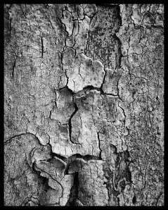 Tree No.4